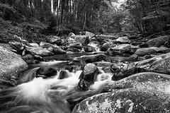 GSMNP Little Pigeon River ( David Gunter) Tags: littlepigeonriver gsmnp river water rock rocks boulder boulders nature natural mountain outdoors landscape waterscape bw blackandwhite monochrome outdoor creek stream waterfall slowshutter tennessee