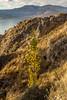Lago Titicaca (Macarena V) Tags: tree sunrise puno peru titicaca lake lago hotel libertador mountain montaña altiplano