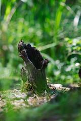 end of Spring at Harris Lake 12 (furrycelt) Tags: harrislake newhillnc nikon85mmf14afd nikon85mmf14 northcarolina shearonharrisreservoir jianwilson photographersoftumblr 85mm d600 june nikon bokeh forest furrycelt ground lake lensblr natural nature spring stump trees water woods