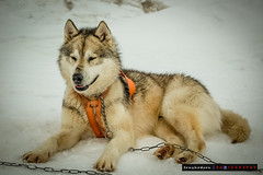 Leader_of_the_Pack (Tony Hodson Photography) Tags: mountain climbing expedition nepal kyrgyzstan pakistan