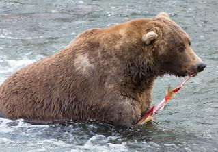 Stretchy Salmon