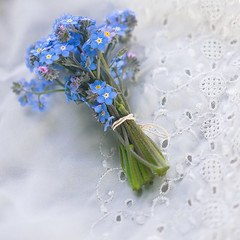 Bunch of blues Monday (borealnz) Tags: forgetmenot blue flowers pretty small tiny lace bunch