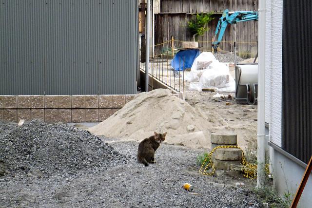 Today's Cat@2011-06-06