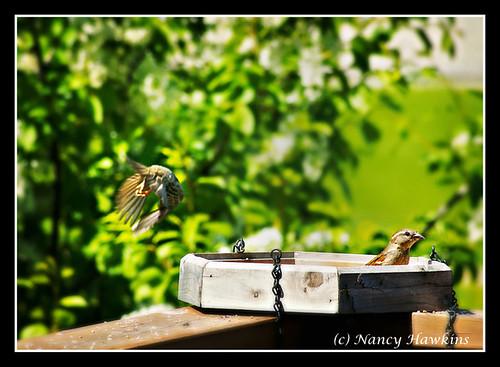 Fly Away Home by Nancy Hawkins