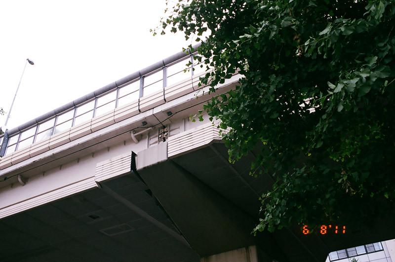 pigeonlove (7 of 13)