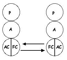 FC - FC