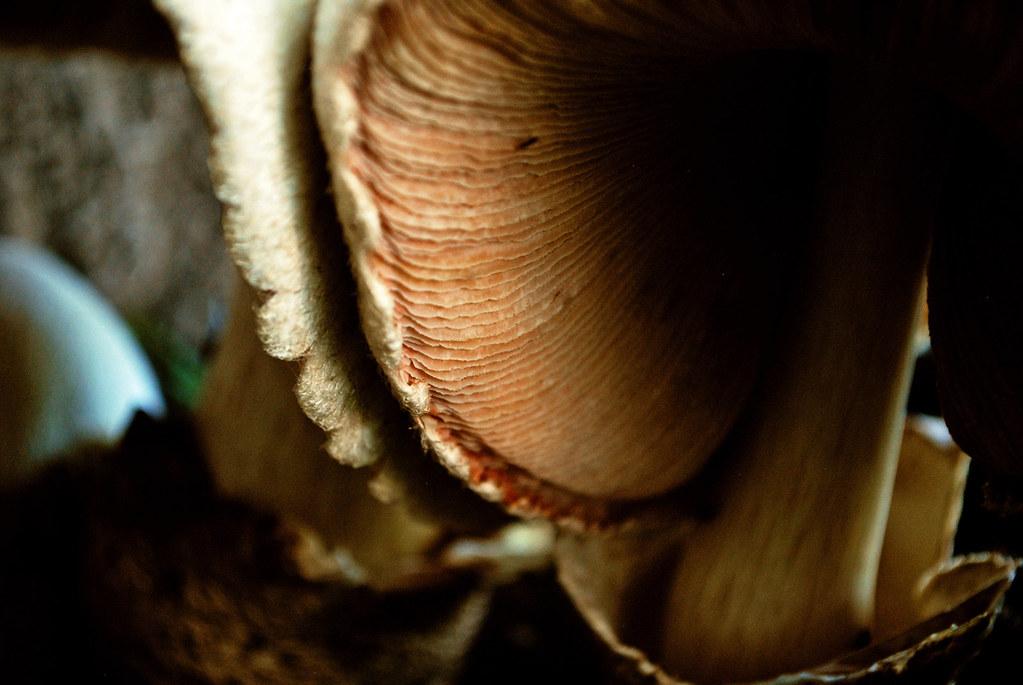 365-21d Mushroom Bug