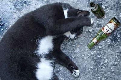 cat_birthday_parties_20