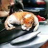 La hora de la siesta (*Miguel Dino*) Tags: cat square chat gato barceloneta felino gat iphone