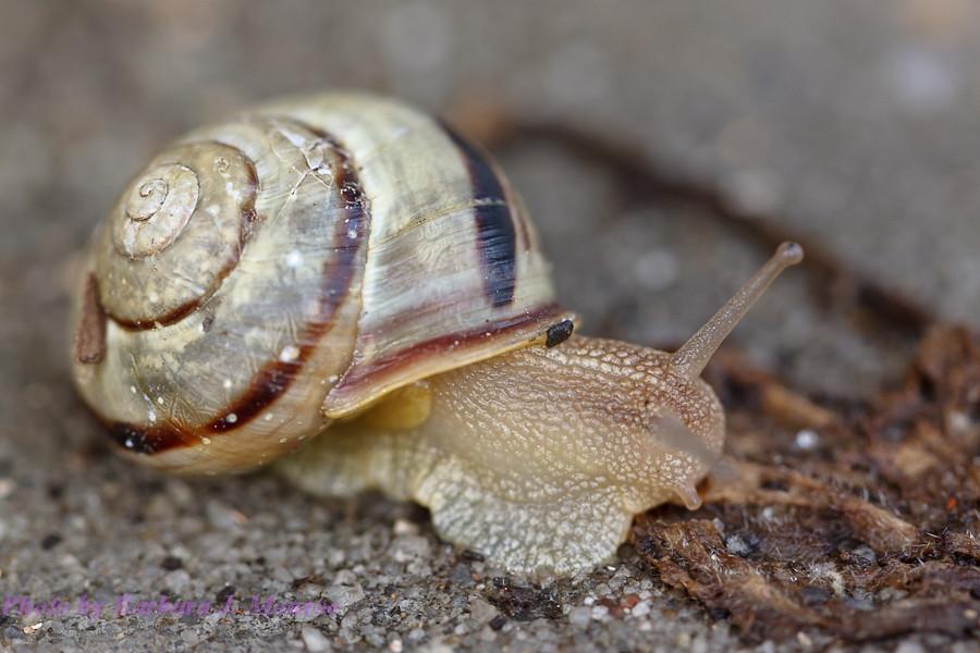 Snail (1 of 3)
