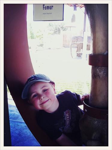 Mason with an elephants femur - #slcsummer12