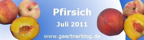 Garten-Koch-Event Juli 2011: Pfirsich