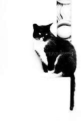 medidative (Arianna ♥__♥) Tags: blackandwhite scale stairs cat 35mm relax nikon riposo rest highkey gatto biancoenero colonna micio meditative silvestro d80 pensieroso