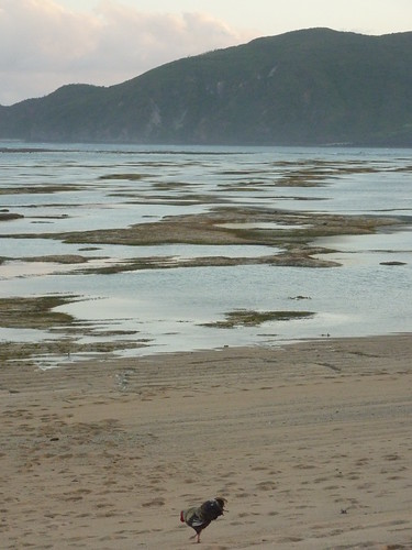 Indo 11-Lombok-Kuta (93)