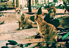 Spitting image. (ADIDA FALLEN ANGEL) Tags: street cats cute animals fur israel telaviv puppies nikon pussy kittens d40 prrrrr