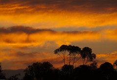 (Raj.Koppula) Tags: california ca red usa tree sunrise sandiego afterthestorm beautifullight redsky burningsky pinksky dramaticsky frontpage aftertherain silhoutte goldenhour 2012 goldenlight miramarlake amazinglight amazingsky treesilhoutte skycolors colorsofsky colorsofskies