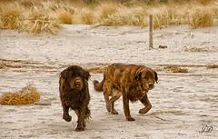 Ostsee 2012-32 (Jan Dierkes) Tags: highqualityanimals dogpethundhaustierfriendbestholidayurlaub