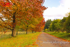 Come in.. (mukunkanap) Tags: road street blue autumn panorama house mountain holiday toronto ontario canada mountains color colour tree fall wet rain fog corner canon fence garden season gate track mt bright fallcolors pano cottage autumncolors mount trail hedge wilson aussie canopy soe colorsoffall 500d colorsofautumn supershot mywinners abigfave fallintoronto anawesomeshot frhwofavs wardenwoodpark