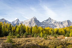 Autumn in Setinel Pass (deanfosterphotography) Tags: banffnationalpark canadianrockies larches mttemple autumn fall hiking landscape mounttemple rockymountains sentinelpass