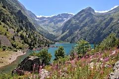 Les fleurs du lac (Chemose) Tags: montagne mountain lauvitel fleur flower paysage landscape lac lake water eau parcdesecrins isre dauphin france canon eos 7d aot t august summer hdr