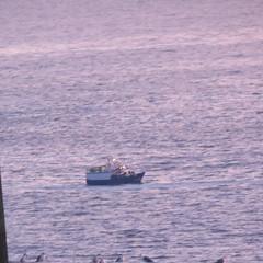 barco de pesca (jesust793) Tags: mar sea barco ship gaviotas bird