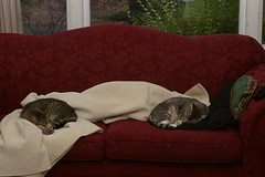 Two sleeping cats, one messy sofa