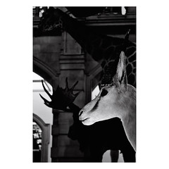 (ilovethatsound) Tags: bw white black animal animals scotland britain glasgow sw schwarz tier weis