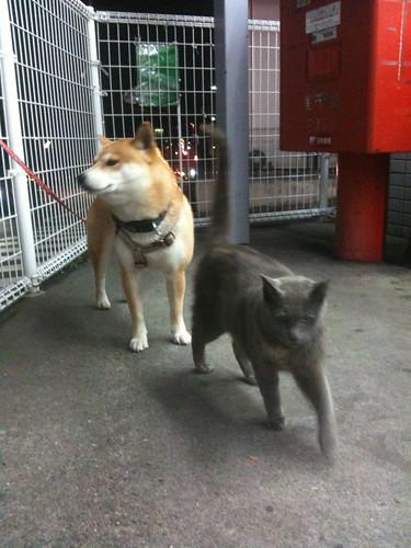 犬と猫 #2