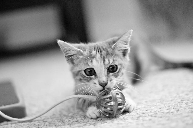 cute rescued kitten playful