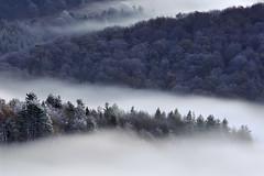Otzaurte inguruko basoak (jonlp) Tags: mist nature forest landscape natura euskalherria basquecountry basoa lanbroa otzaurte paisajea antzigarra
