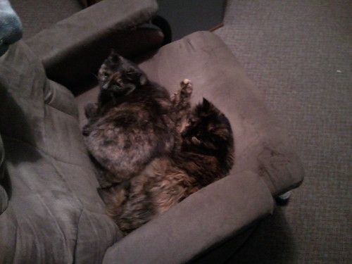My two cats, Kaylee on the left and Marble on the right, in my reading chair, from above