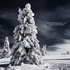 White Ink (Philippe Sainte-Laudy) Tags: trees winter mountain snow nature thanks landscape bisous philippesaintelaudy nikond300 thesecretlifeoftrees sublimemasterpiece