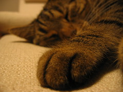 tiger sleepz (TabascoEye) Tags: cat sleep katzi bestofcats