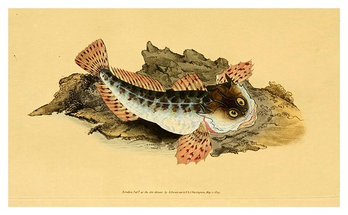 007-The natural history of British fishes 1802-Edward Donovan