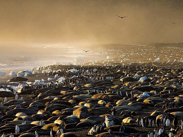 Морские слоны и Королевские пингвины