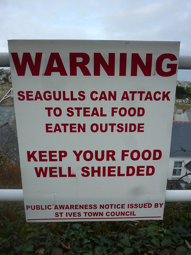 Seagulls of St Ives: Warning 1