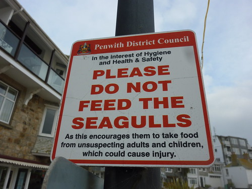 Seagulls of St Ives: Warning 3