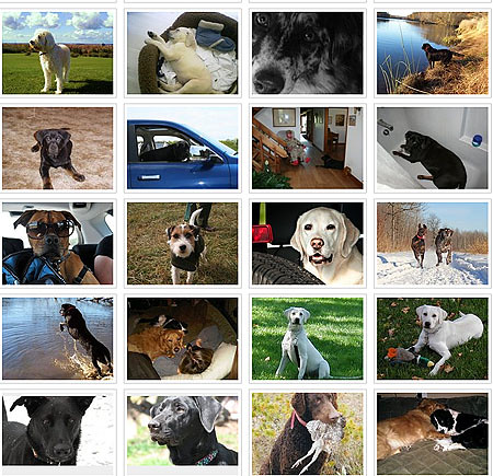 Orvis Dogs Facebook page