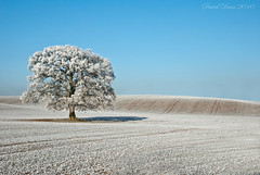 Frosted Oak (jactoll) Tags: blue winter sky cold tree ice rural landscape countryside oak nikon frost december hoarfrost country freezing freeze arrow nikkor 1001nights warwickshire vr subzero hoar d60 alcester warks 1685mm 1001nightsmagiccity jactoll arrowlane