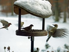 birds feeder tomhart e410