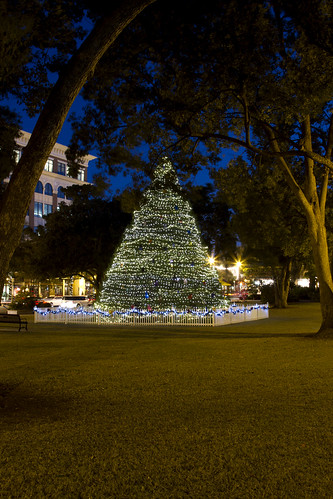 Winter Park Christmas Tree