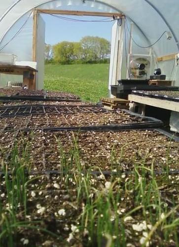 Seedlings late April 2010.4