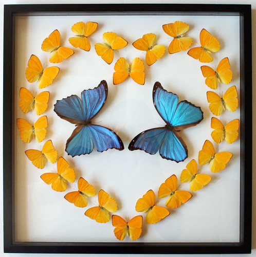 mounted butterfly heart mothers day gift with blue morpho butterflies