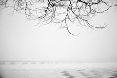 Catharsis (bijoyKetan) Tags: winter white snow weather boston extreme tamron1750mm harvardbridgeexperiment