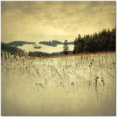 If On A Winter's Night... (pixel_unikat) Tags: tree forest square landscape austria hill explore textured mhlviertel thankstodarkwood67fortexture sunflowersfromthelastyear