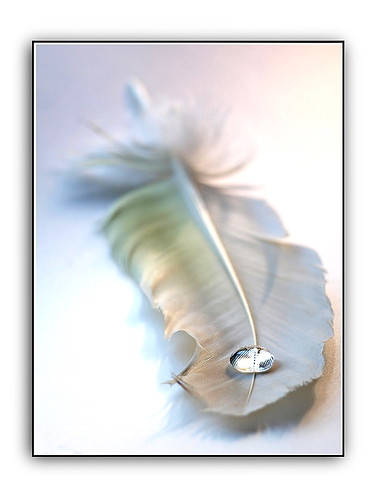 feather & water drop 5