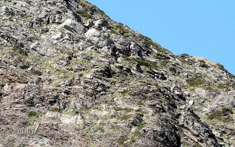 奇萊北峰旁光禿的石壁