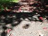 Thursday, 30 December 2010 (kate ravenscroft) Tags: pink shadow sun black green ahead petals bright path melbourne future thursday footpath rosy 30december2010