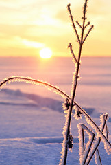 frosty crystals (Youronas) Tags: pink schnee light red sky orange sun sunlight snow plant cold ice nature clouds sunrise canon germany landscape bayern deutschland bavaria licht sticks frost december crystal dusk natur pflanze spuren traces himmel wolken frosty franconia 7d dmmerung dezember franken kalt eis twigs landschaft sonne sonnenaufgang daybreak flur frostig morgendmmerung sonnenlicht eiskristall stngel 1585 fusspuren