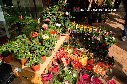 Hong-kong-flower-market-3